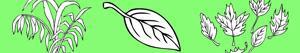 Ζωγραφική Φυτά και Φύλλα ζωγραφιές